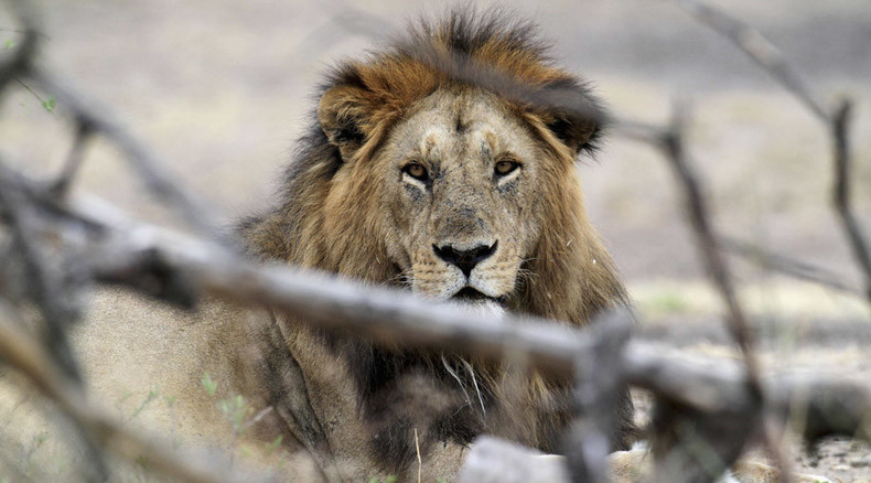 Cecil the lion Oxford University study funded by pro-hunting groups