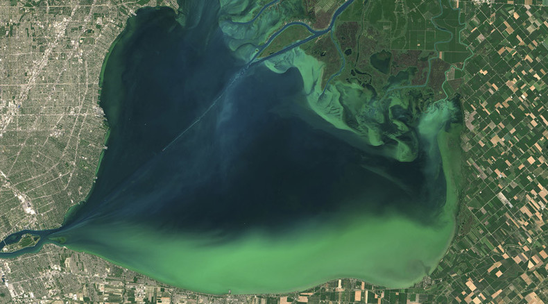 Toxicity, short-term memory loss: Algae advances off US West Coast, poisoning seafood