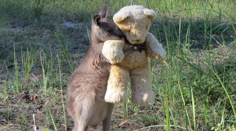 Worth a million likes: Pic of baby kangaroo hugging teddy bear melts hearts worldwide (PHOTO)