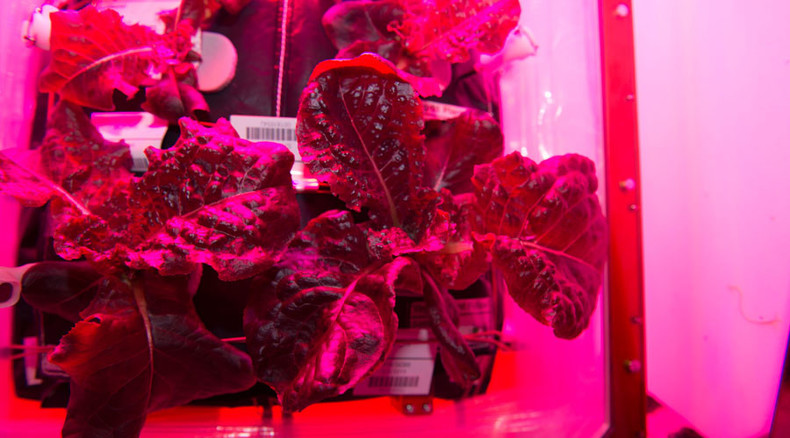 Space salad: ISS astronauts to eat first cosmic lettuce