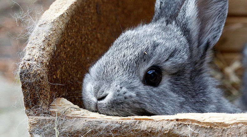 Too busy for bunnies: Scots abandon pet rabbits in their hundreds