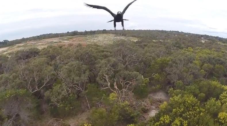 Eagle – 1, Drone – 0 (VIDEO)