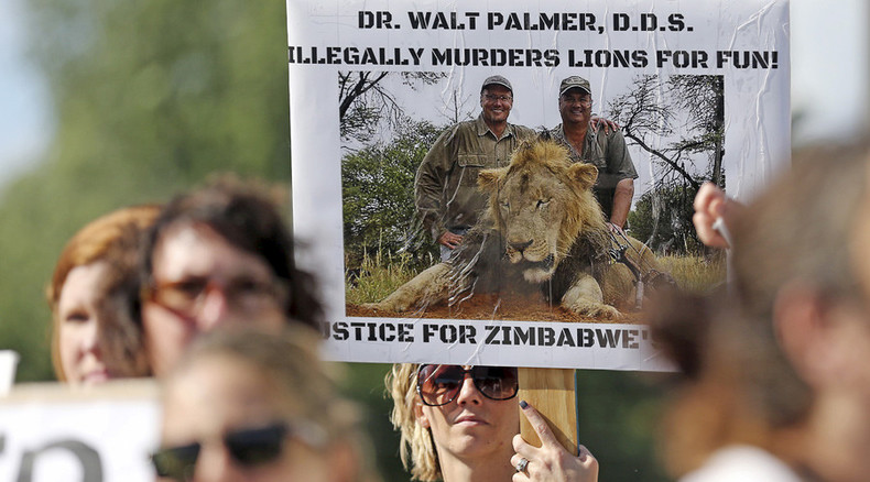 Cecil the lion's killer illegally hunted black bear, offered 20k as cover-up bribe