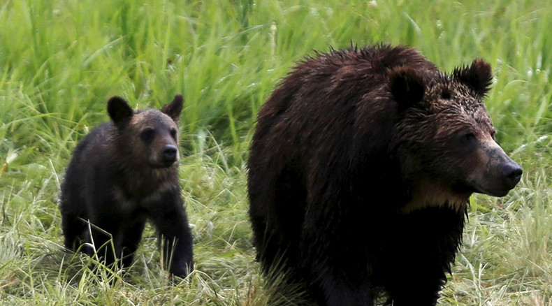 Alaska man dons costume to harass bears
