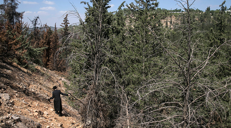 Environment groups urge IDF to curb academy construction plans in Jerusalem Forest