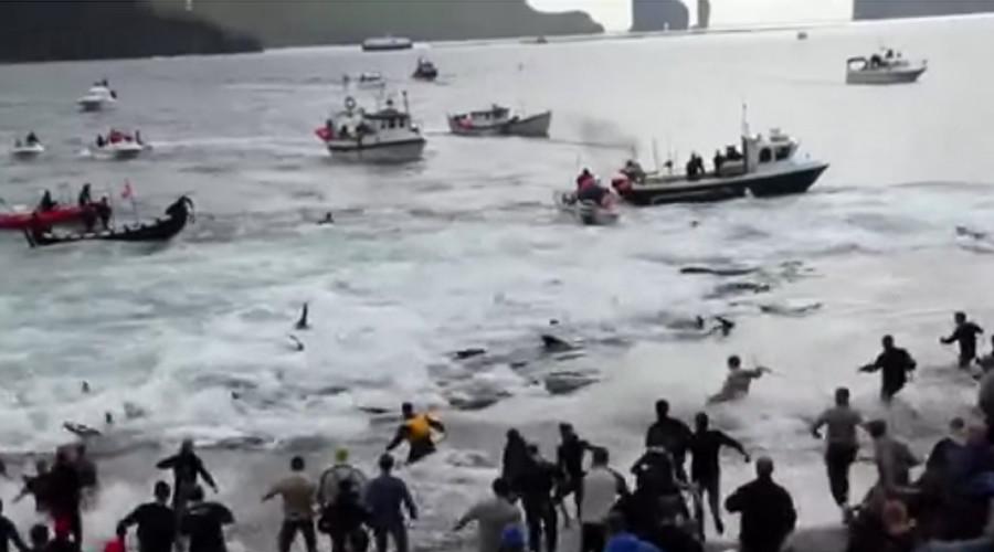 Attempt to disrupt Faroe Islands whale hunt results in jail, fines for Sea Shepherd activists