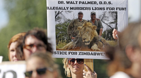 Out of hiding: Cecil the lion's killer returns to work