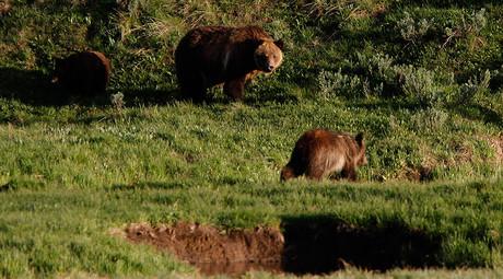 Alaska man dons costume to harass bears