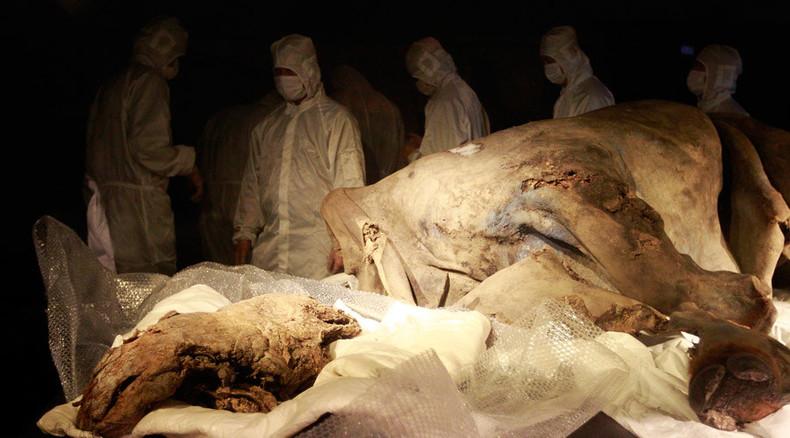 Real-life 'Jurassic Park'? Siberian lab set to clone extinct mammals