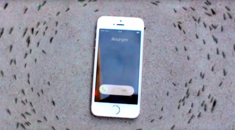 Mysterious ant 'tribal dance' around ringing iPhone (VIDEO)