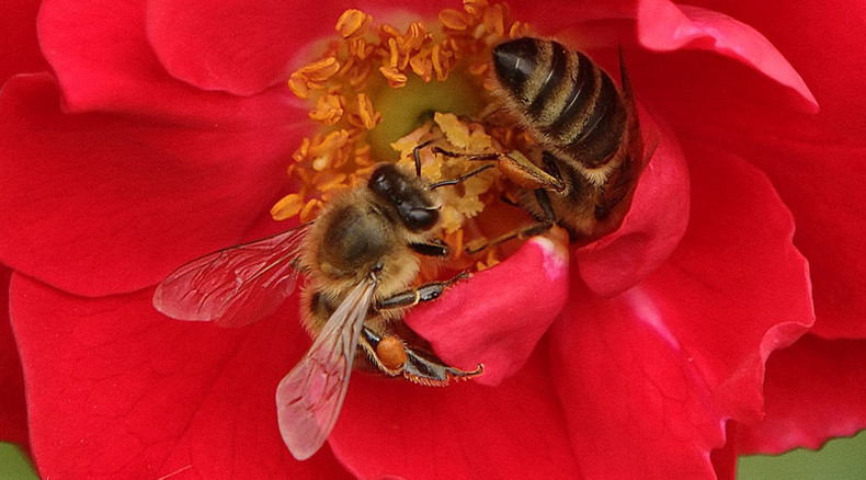 Stinging rebuke: Court rules against EPA's lax approval of Dow's bee-poisonous pesticide