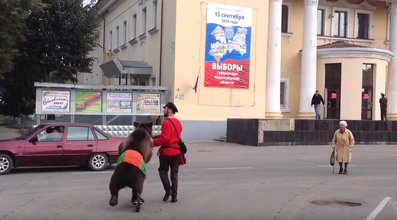 Russia where bears vote: 11,000 local elections roll through country