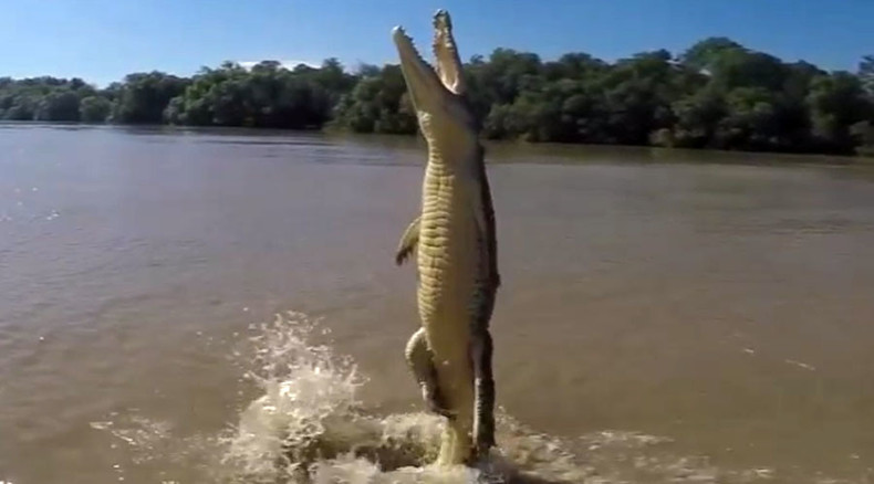 Blood-curdling footage reveals how crocodiles' tails propel them out of water for food