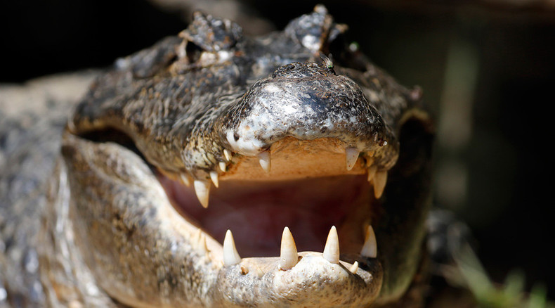 See you later, alligator: Creepy footage shows what it's like to be eaten by a croc