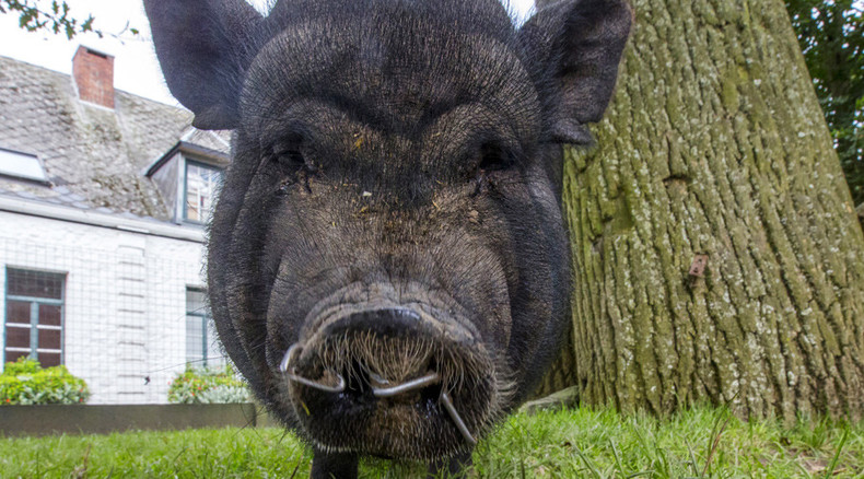 Tories snOut! 'Pig mask contest' launched for Conservative Party conference protests
