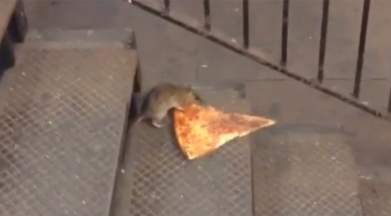 Big cheese: 'Pizza rat' filmed dragging pizza slice into NYC subway, internet mesmerized