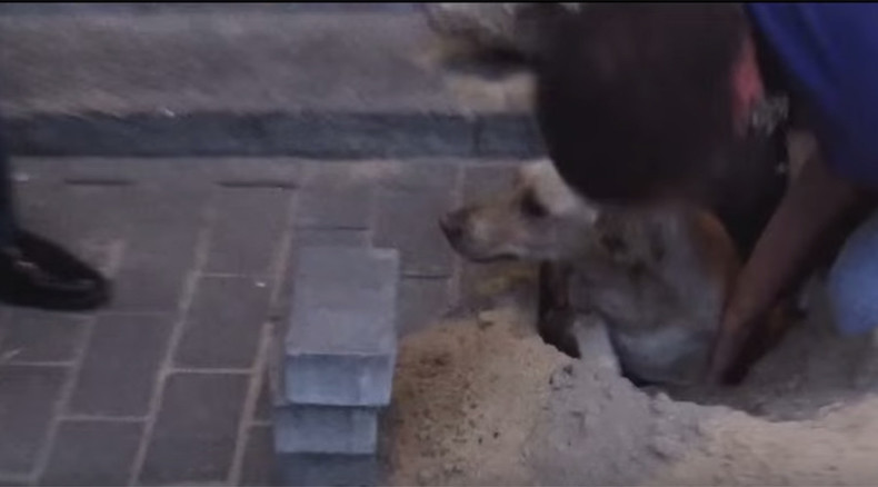 Pregnant dog rescued after being buried alive for 2 days (VIDEO)