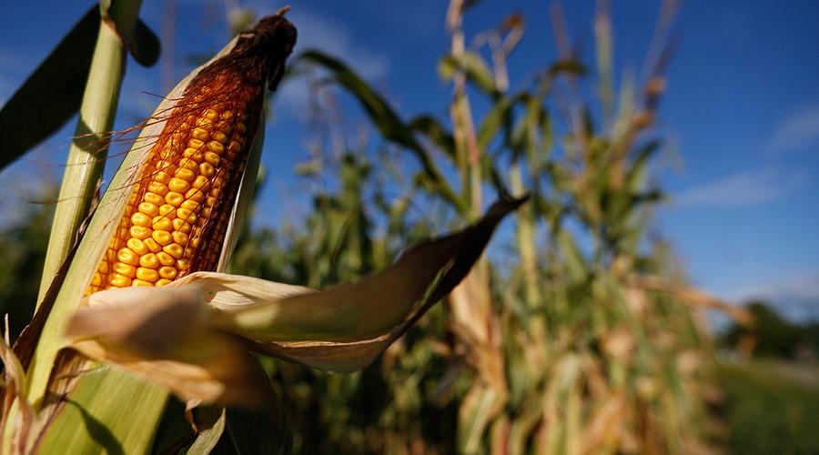 French court upholds guilty verdict in Monsanto poisoning case