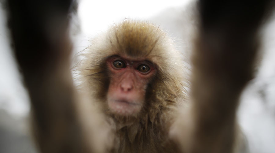 PETA wants copyright for monkey's selfies – but what about other photo-savvy animals? (PHOTOS)