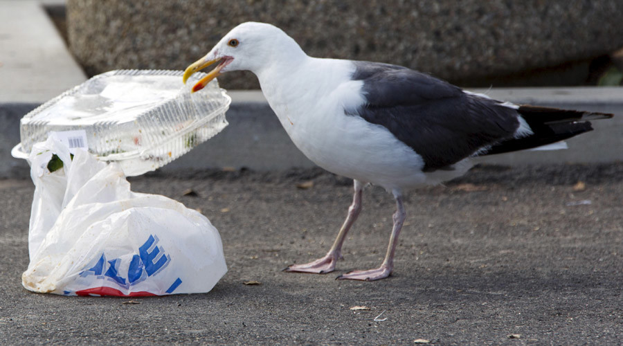 4 million of plastic bits litter San Francisco Bay daily – study