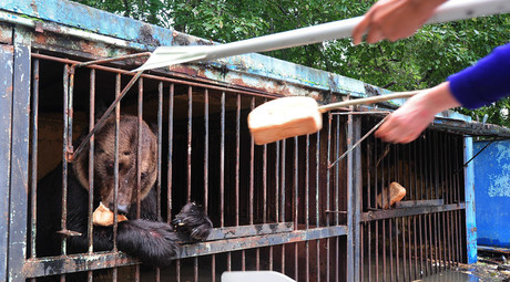 Rescuers save caged animals struggling to survive flood in Russian Far East zoo
