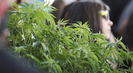 Organic weed? Colorado wants to restrict pesticides on marijuana