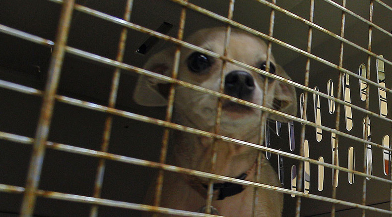 Detroit animal shelter ex-worker claims it has 'slaughterhouse' conditions