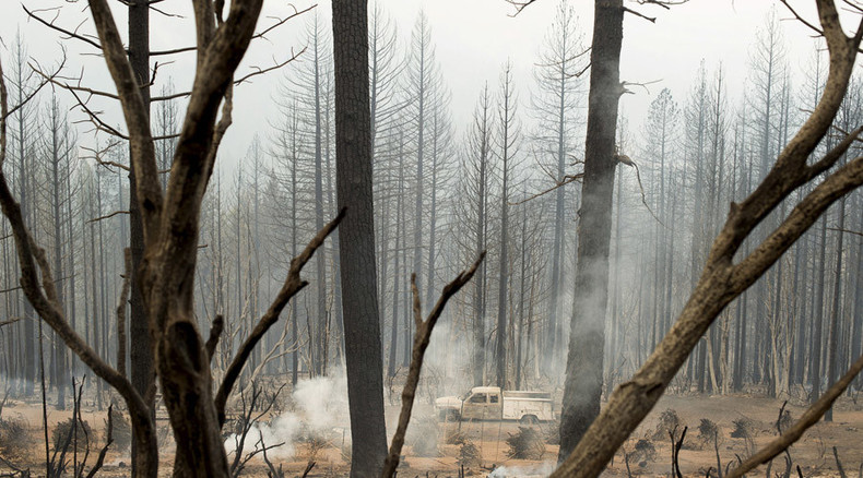 'Tinderbox': 20% of California's forests might die – research