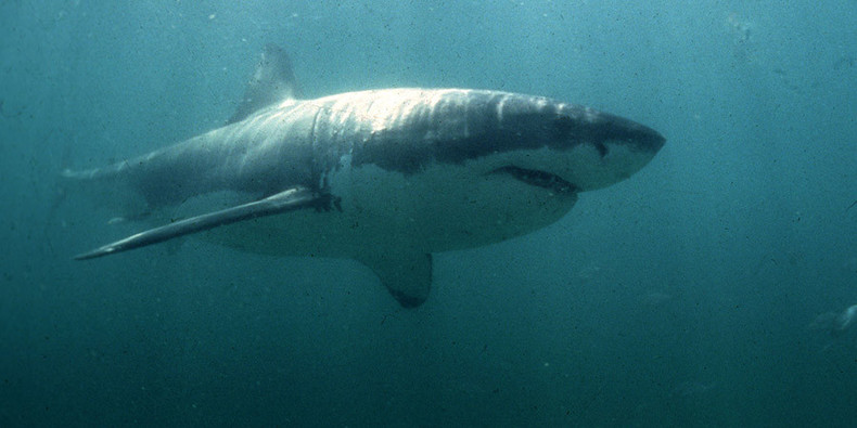 Australia to send drones & sonar to monitor sharks after steep rise in attacks