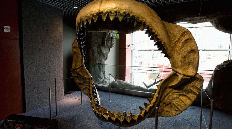 Enormous teeth of ancient 60ft megalodon shark found on NC beaches