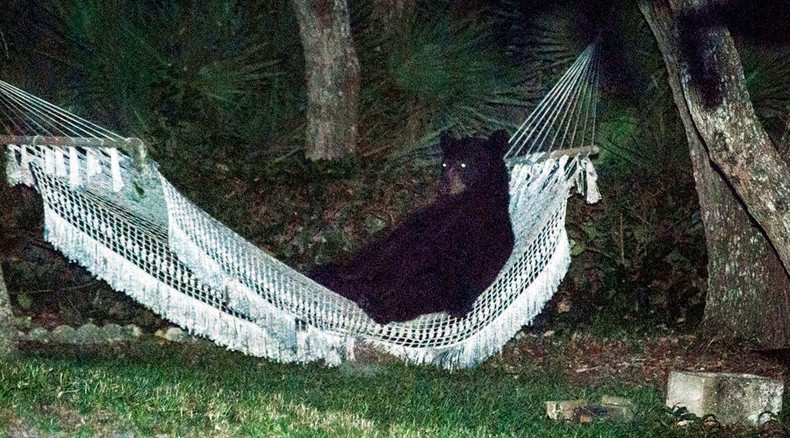 Bears here, there and everywhere: Wild animals rule, possessing homes, parks, cars & boats (VIDEOS)