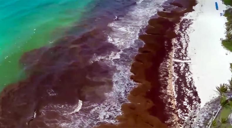 Mexico deploys navy to repel seaweed invasion (PHOTOS, VIDEO