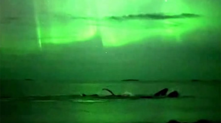 Whale of a time! Humpbacks under auroras, next to your paddleboard, on your kayak (VIDEOS)