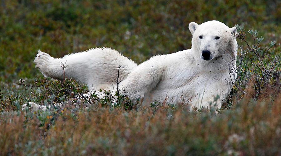 Calais asylum seekers sneak into truck with polar bear headed for UK (VIDEO)