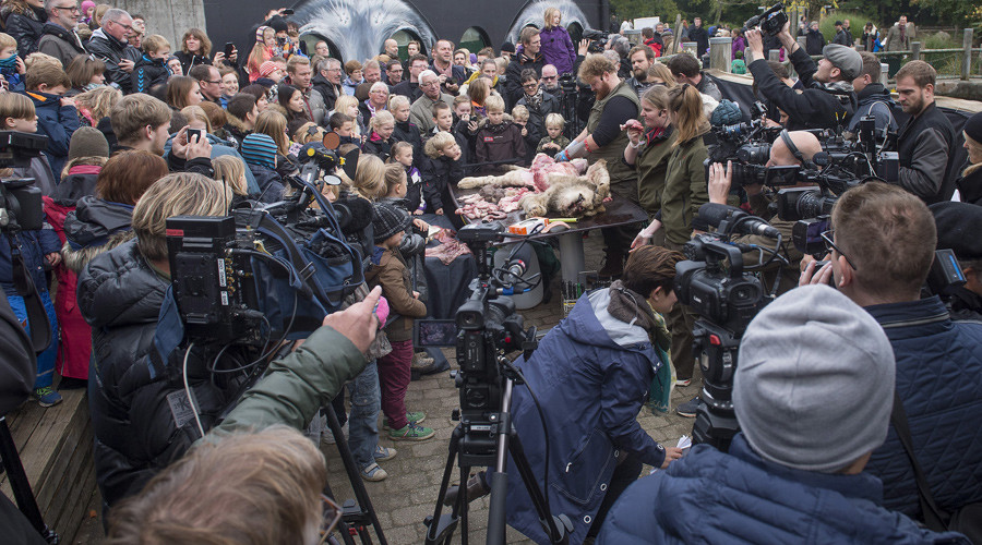 Danish zoo dissects lion in front of spectators, incl children (GRAPHIC VIDEO)