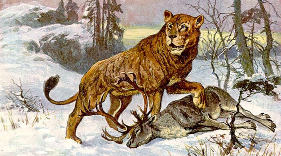 10,000 yo cave lion cubs found in Siberia go on show