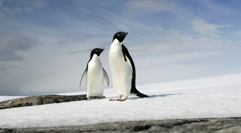 Fox massacres 14 penguins at Melbourne zoo