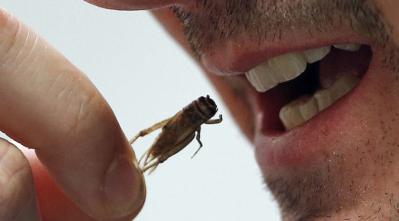 Eat insects as meat alternative, says govt report