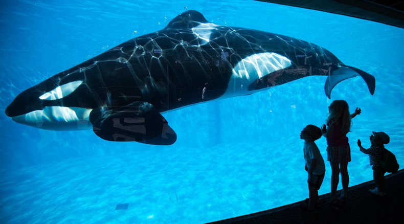 SeaWorld to end trick-filled orca shows, transition to 'more natural' experience