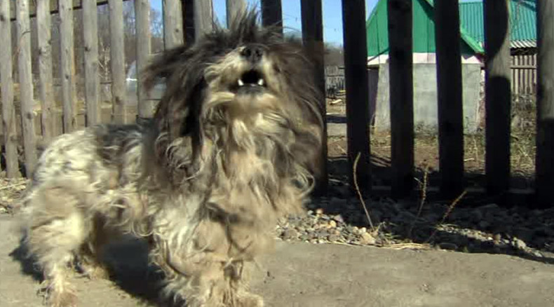 Tiny pooch saves 2 small boys from bear attack in Russia