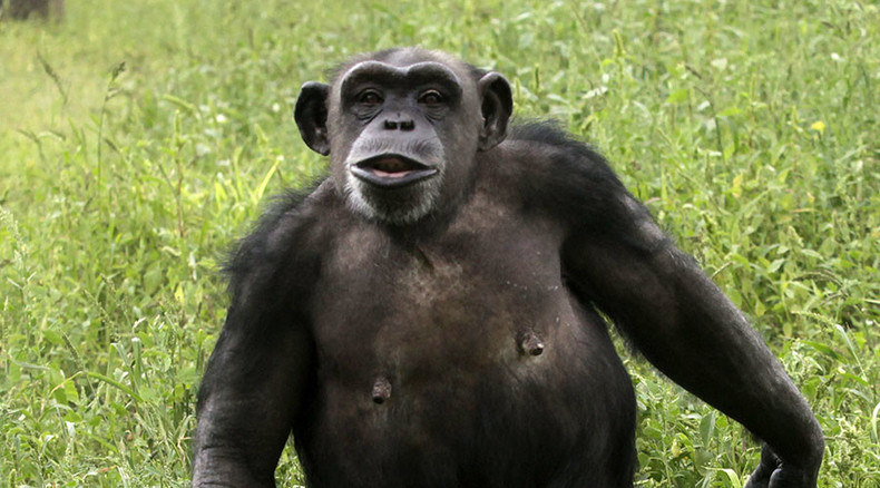 US gov't halts biomedical research on chimpanzees