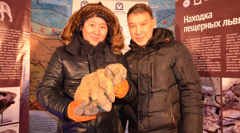 Cool for cats: Ancient frozen lion cubs found in Siberian glacier may be cloned (PHOTOS)