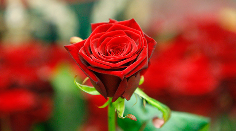 Flower power: Swedish scientists create world's first electronic 'cyborg' rose