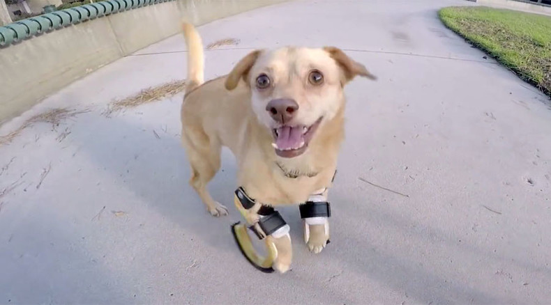 Give me a leg-up! Prosthetic limbs give dog new lease of life (VIDEO)