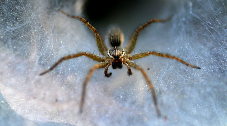 'It's like a horror movie': Tennessee neighborhood invaded by spiders