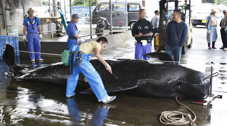 333 whales per year? Japan fleet sails out for 'scientific' research despite UN ruling