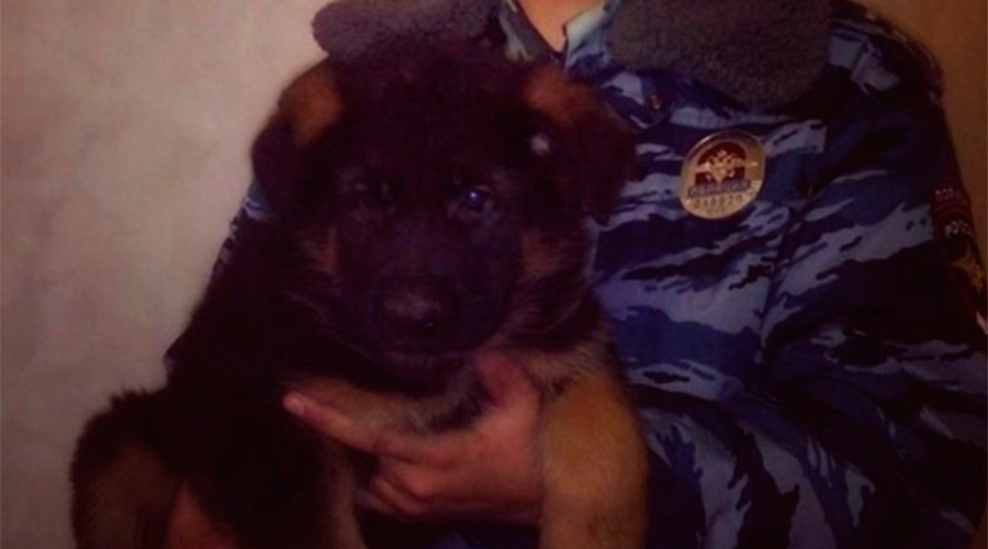 Russia to send puppy to France after police dog got killed in anti-terrorist raid