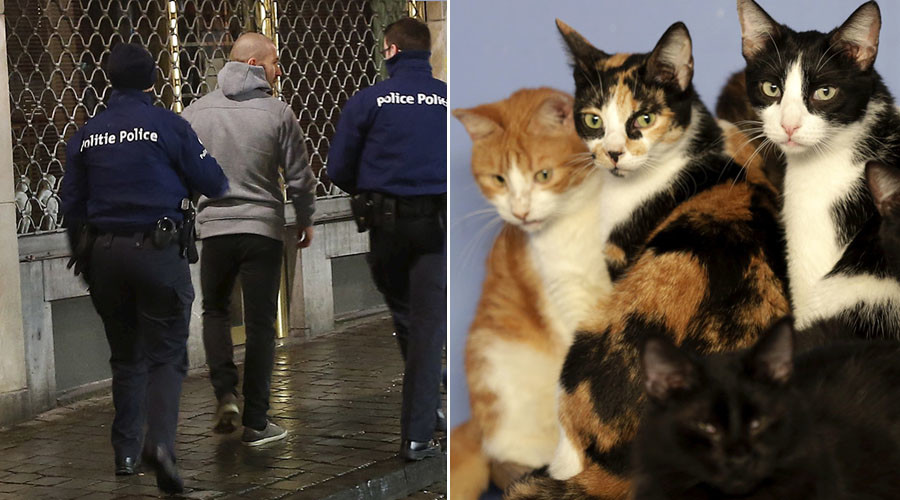 'Not afraid': Police ask Brussels residents not to disclose raids, so they tweet CATS instead