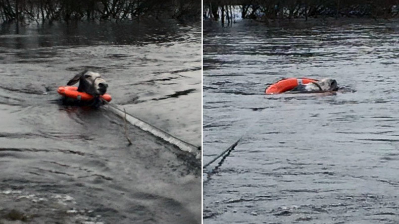 VIDEO: Stranded Irish donkey rescued by local heroes