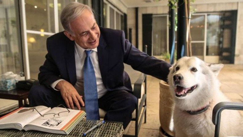 Netanyahu's dog says 'Happy Hannukah' by biting 2 guests at official event